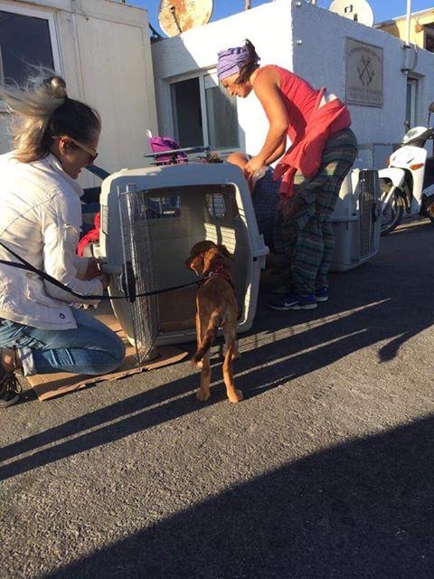 Hund Tierheime
