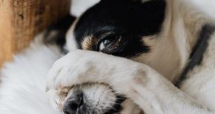 unerwuenschtes Hundegebell